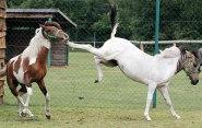 horsekick_450x287