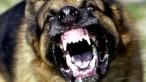 aggressive-dog-750x422